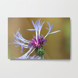 Cornflower Close Up - Flower Photograph Metal Print
