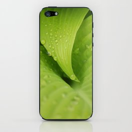 Dew Drops iPhone Skin