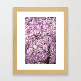 Cherry Blossom Spring Framed Art Print