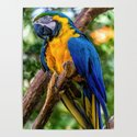 Macaw by glauco_m