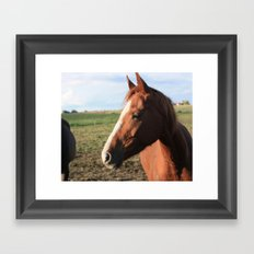 Afternoon mood of a four-legged friend Framed Art Print
