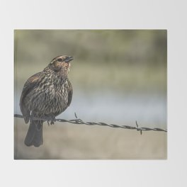 Female Red-winged Blackbird Puffed Up with Song Throw Blanket