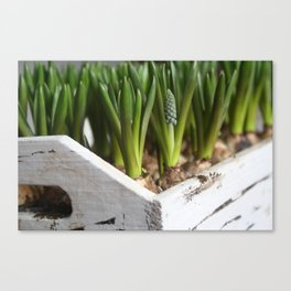 Box of Spring Canvas Print