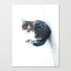 snowy cat Canvas Print