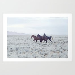 The wild horses of Namibia / Oct 2013 Art Print