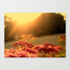 Pink bulb in the Sunrise Canvas Print