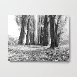 Poplar Avenue Metal Print