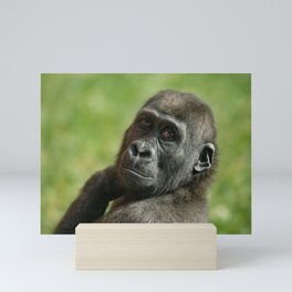 Gorilla Shufai Looking Over His Shoulder Mini Art Print