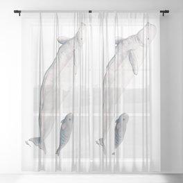 Beluga and baby beluga whale Sheer Curtain