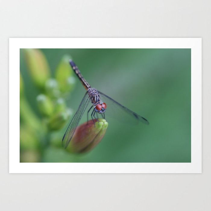 dragonflies are fairies in diguise Art Print