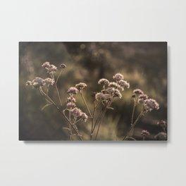 Cerrado Flower Metal Print