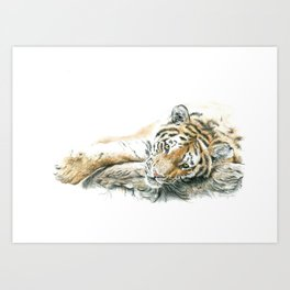 Siberian Tiger Lying Down Art Print