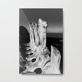 Whale Spine Metal Print