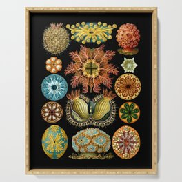 Ernst Haeckel - Scientific Illustration - Ascidiae Serving Tray