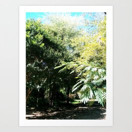 Evergreens Art Print