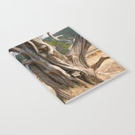 OLD JUNIPER AT BURROWS PASS ANACORTES Notebook