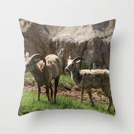 Wild Bighorn Sheeps Throw Pillow