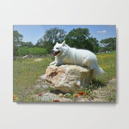 Sylvie Poses in the Texas Wildflowers Metal Print