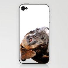 boxer dog portrait iPhone & iPod Skin