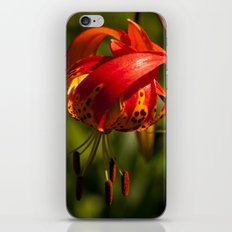 Firery Lily iPhone & iPod Skin