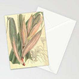 Flower 8197 pandanus houlletii Stationery Cards