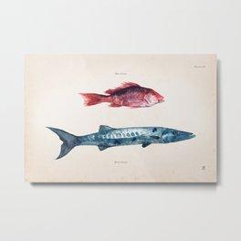 Red Fish Blue Fish Metal Print