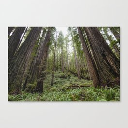 Fern Alley - Redwood Forest Nature Photography Canvas Print