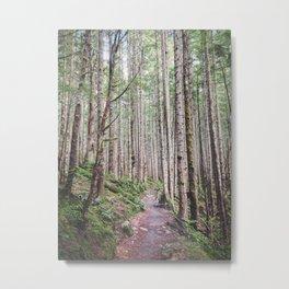 Path of Tall Pine Metal Print