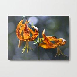 Humboldt Lilies Metal Print