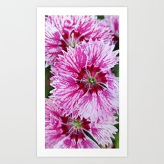 Pink and White Flowers Art Print