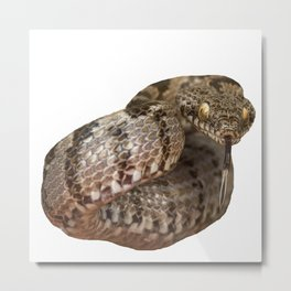 Ottoman Viper Snake Tasting The Air Metal Print