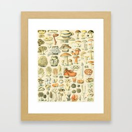 Mushroom Diagram // Champignons II XL by Adolphe Millot 19th Century Science Textbook Artwork Framed Art Print
