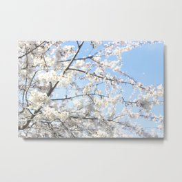 Bright Skies and Bright Blossoms Metal Print