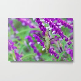 Purple Attraction Hummingbird Metal Print
