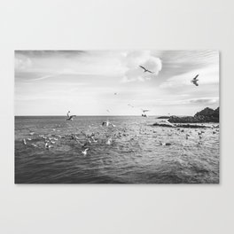 Irish bay and flying seagulls Canvas Print