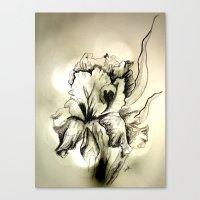 iris Canvas Prints featuring Iris by Suzanne Kurilla