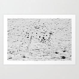 Dalmatian in Snow  Art Print