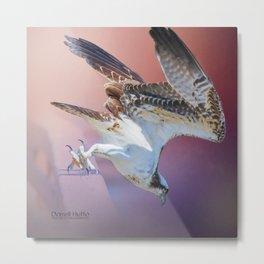 Feeding Osprey Metal Print