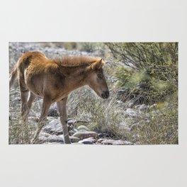 Salt River Wild Foal Rug