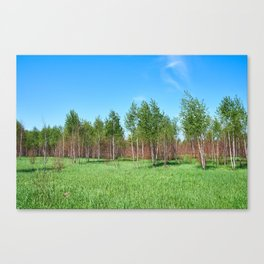 Beautiful young forest in summer day Canvas Print