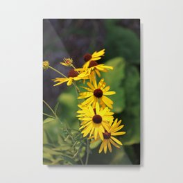 Black Eyed Beauties Metal Print