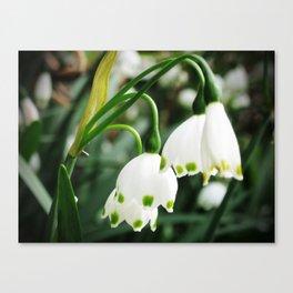Spring Snowflake Canvas Print