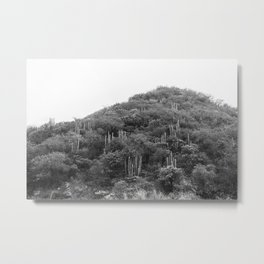 Metztitlán valley Metal Print