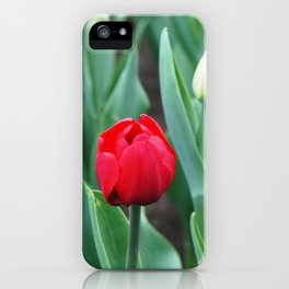 Spring flowers blooming in April and May on lawns, bushes and trees in the city park. iPhone Case
