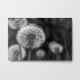 Monochromatic dandelion on black Metal Print