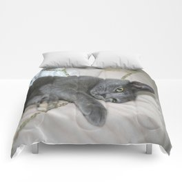 Grey Kitten Relaxed On A Bed  Comforters