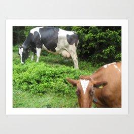 Cows 1 Art Print