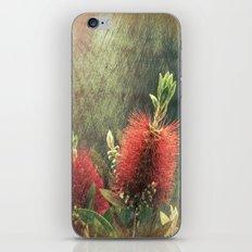 Bottle Brush Plant iPhone & iPod Skin