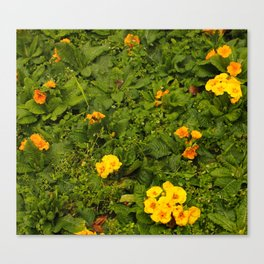Early Yellow Bloomers Canvas Print