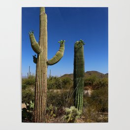 In The Sonoran Desert Poster